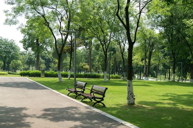 緑豊かな緑の公園の石の通路