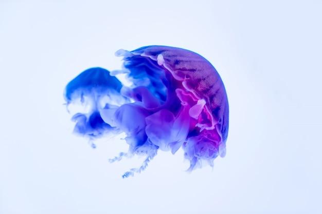 Танцующие медузы в глубине моря