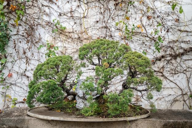Бонсай в саду сучжоу, китай