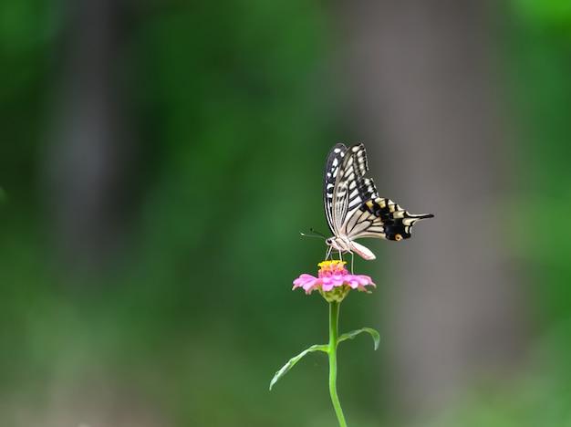ピンクの花に蝶