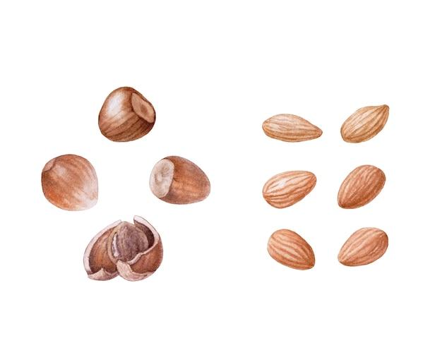 Акварельные орехи. миндаль, фундук изолированы.