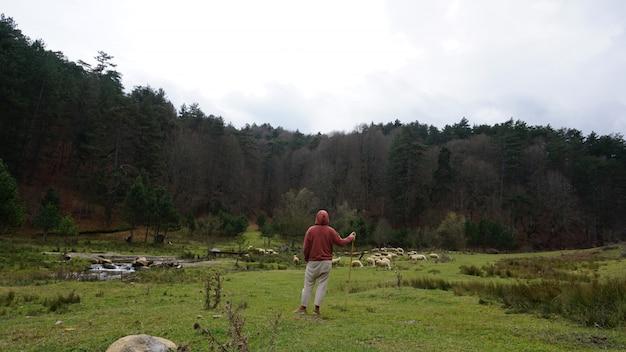 草原で彼の羊と羊飼い