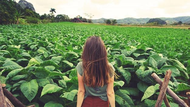 キューバの緑のタバコ畑を見ている女性