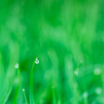 露の滴で新鮮な草