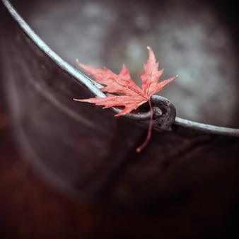秋の背景に水で錫のバケツの端に美しい赤いカエデの葉