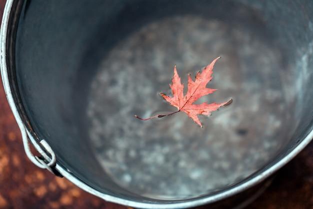 素敵な赤いカエデの葉がブリキのバケツの水面に浮かんでいます。上面図。