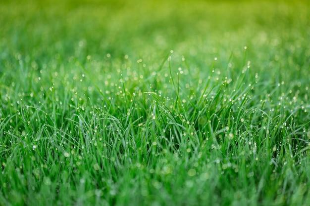 新鮮な草の軽い朝露。