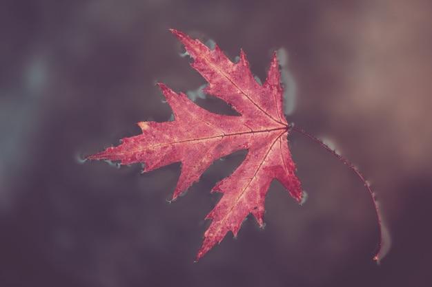 秋の紅葉のカエデは地表水にあります。秋の概念
