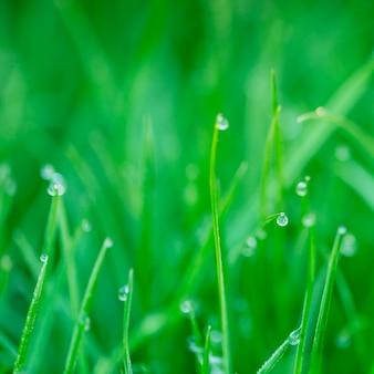 朝の緑の芝生に水が滴ります。