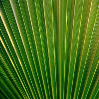緑のヤシの葉の質感。