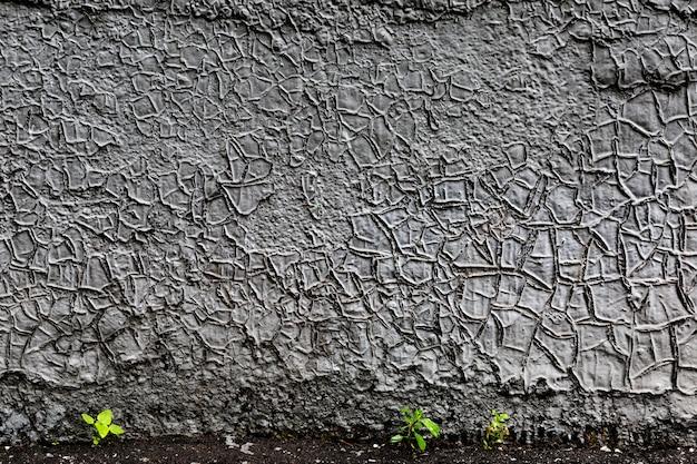 植物と灰色のひびの入った塗装壁の背景
