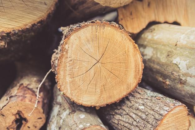 冬に収穫した薪のクローズアップ。