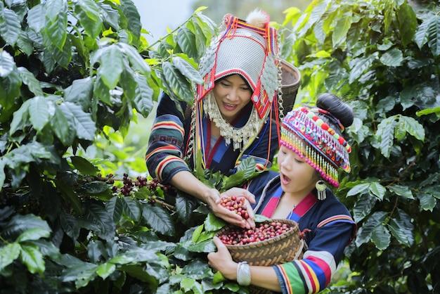 コーヒー農園