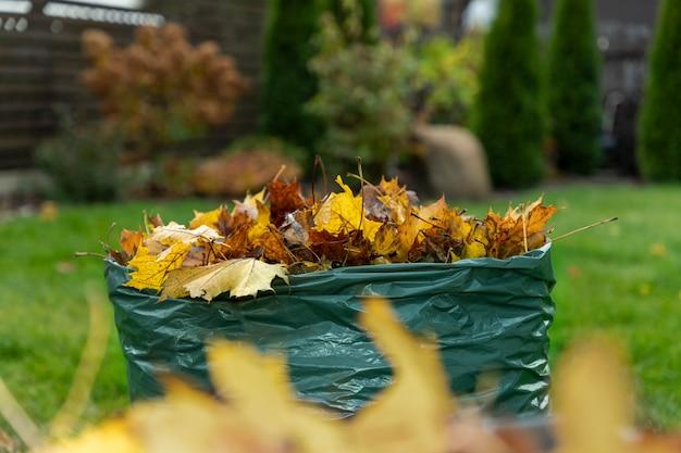 Листья клена, опавшие осенью, собирают в биоразлагаемый пакет и готовят для дальнейшего компостирования. защита окружающей среды. ноль отходов концепции.