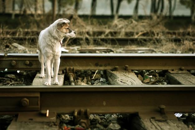 待っている孤独な犬