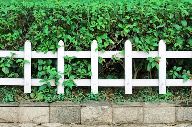 フェンスと植物