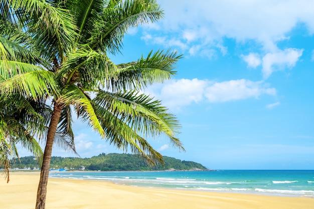 夏のビーチの風景