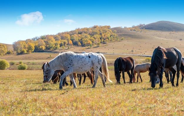 大草原の馬