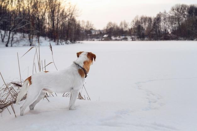 凍った湖を見て白い犬