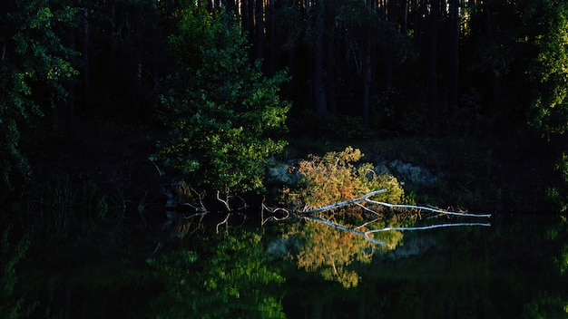 Солнечный свет на сломанной березы с желтыми листьями на реке с отражением