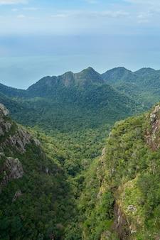 上から見た木々と山