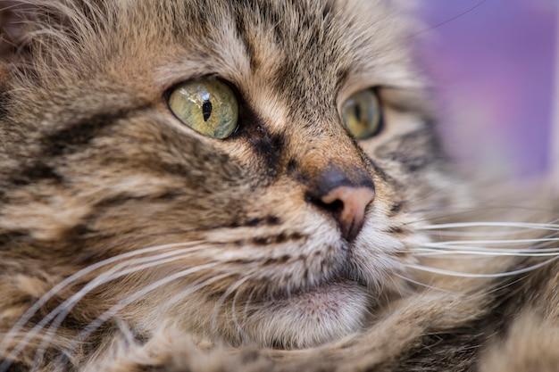 Симпатичная кошка фото