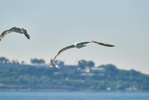 Красивая чайка летит в воздухе