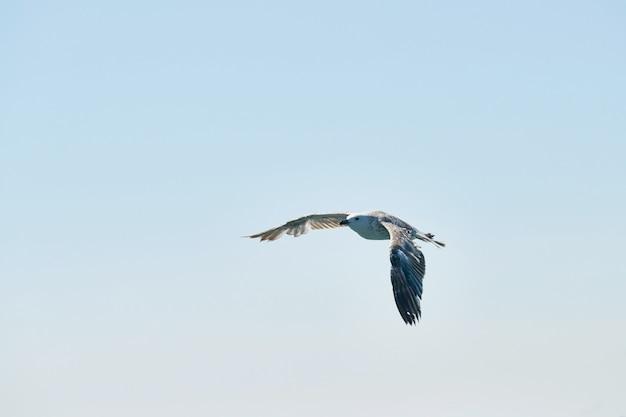 空を飛んでいる美しいカモメ
