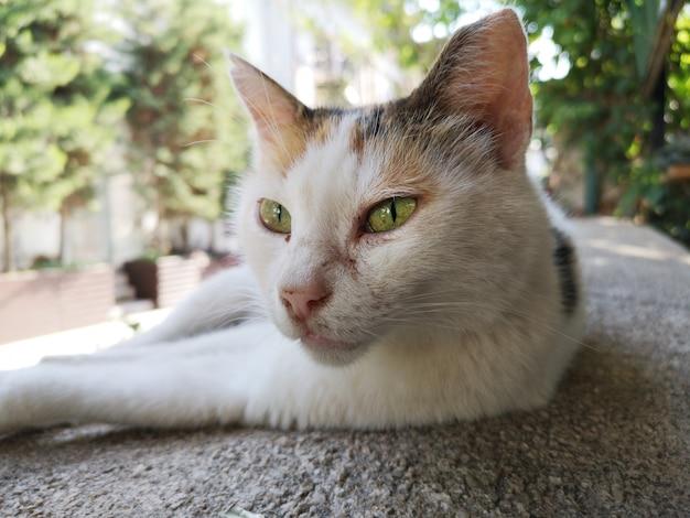 安静時のかわいい猫の肖像画