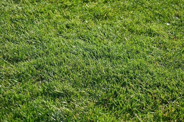 緑の草と公園のクローズアップ