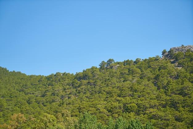 空の背景に緑豊かな森