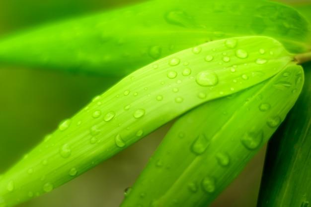 緑の葉、自然の概念上の水滴