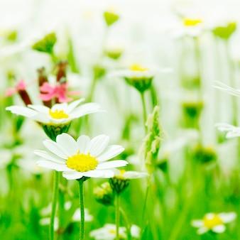 花色付きの背景