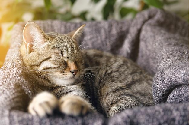 彼のバスケットで眠っている縞模様の子猫