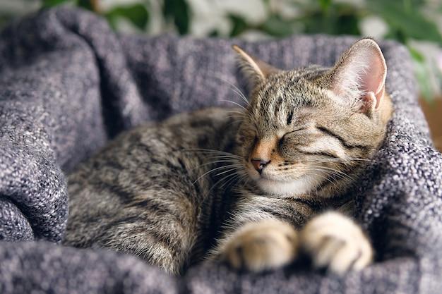 Домашняя кошка лежит и спит в корзине с вязаным одеялом.
