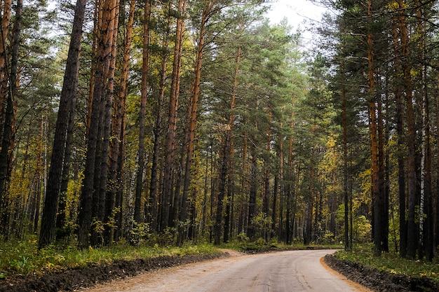 夏の日、森の中、休憩地近くの森の中を走る道。写真は粒状感とノイズで覆われています。
