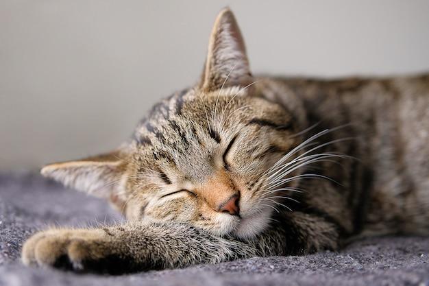 飼い猫は横になって、毛布の上に寝て、快適に足を頭に乗せます。