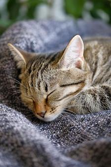 Домашняя кошка лежит и спит на вязаном одеяле, удобно положив голову на лапу.