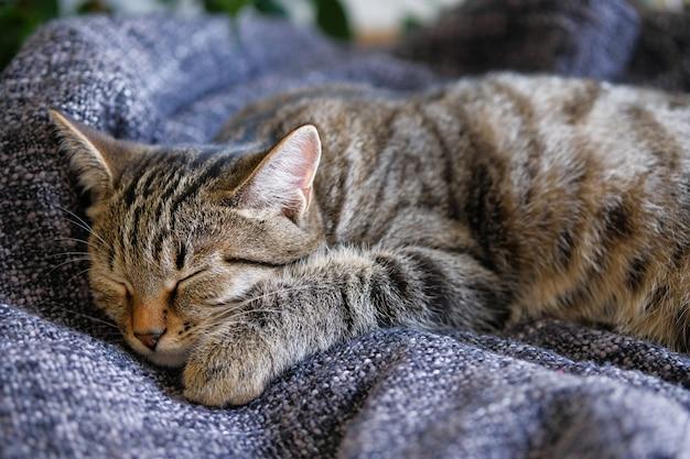 Домашний кот лежит и спит на вязаном одеяле, уютно свернувшись калачиком.