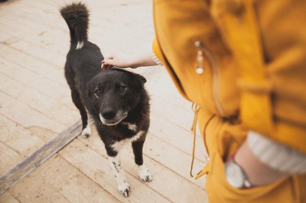 Женщина гладит старую добрую бездомную потерянную собаку.