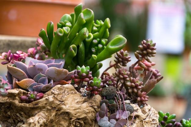 Прямоугольное расположение суккулентов; кактусовые суккуленты в плантаторе