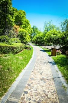 Зеленый городской парк