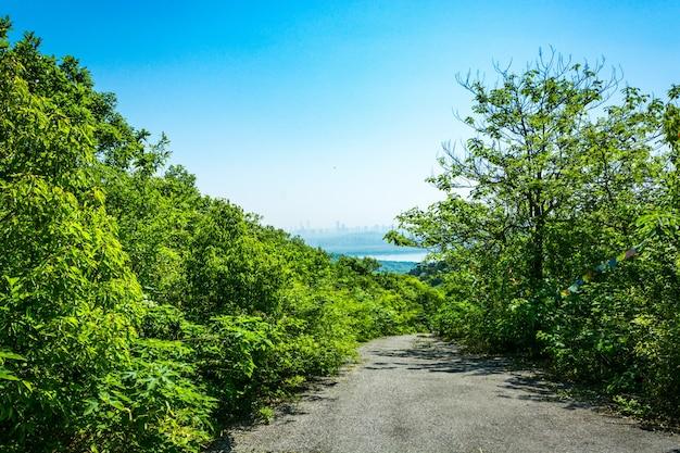 美しい山道