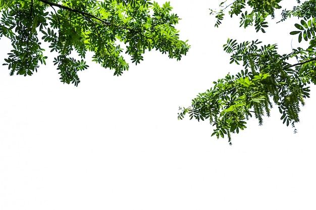白い背景と緑の木