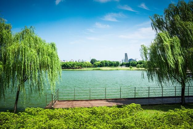 荒野の湖の針葉樹林の反射