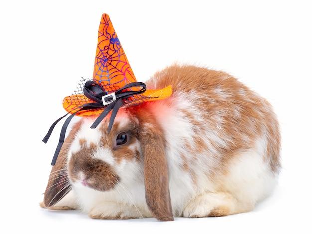 かわいい白と茶色のウサギはハロウィーンの帽子をかぶる