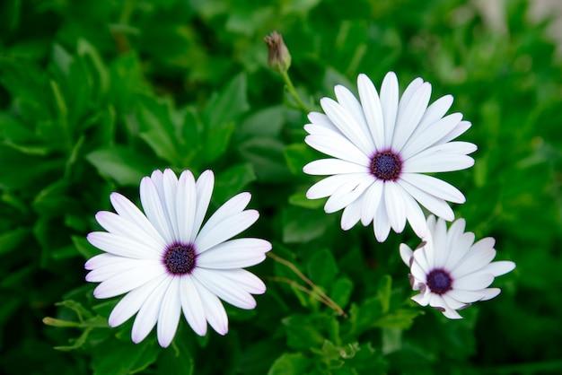 Белые цветы крупным планом