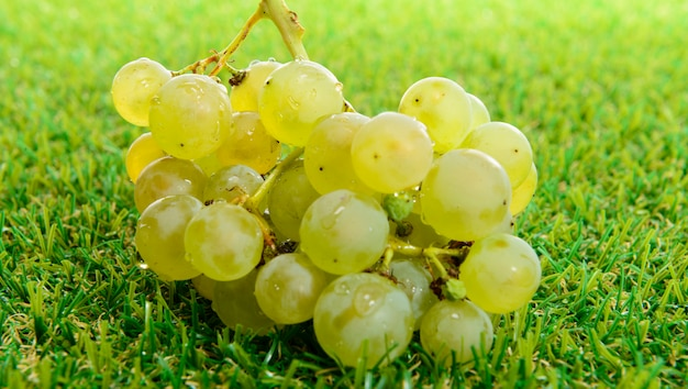 Букет из белых сортов винограда на траве