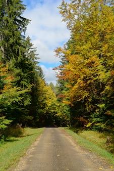 Небольшая дорога осенью с деревьями с обеих сторон