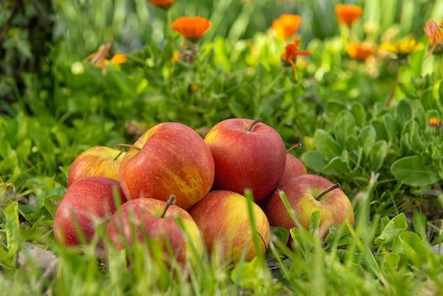 木の近くの草の中のリンゴのグループ